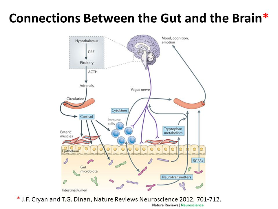Connections Between the Gut and the Brain*