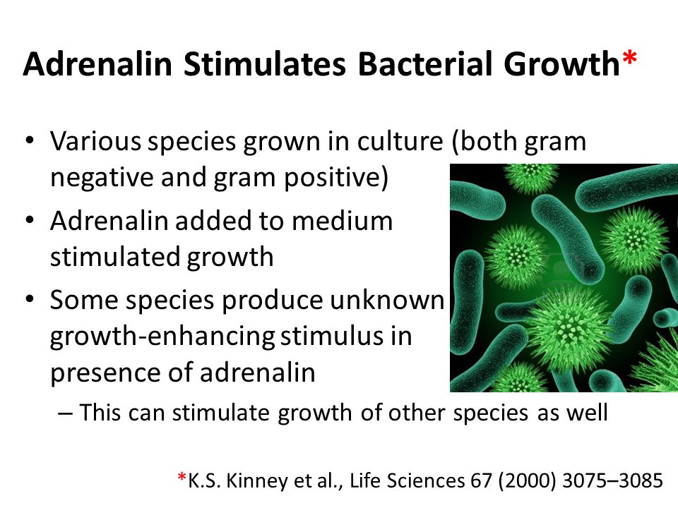 Adrenalin Stimulates Bacterial Growth*