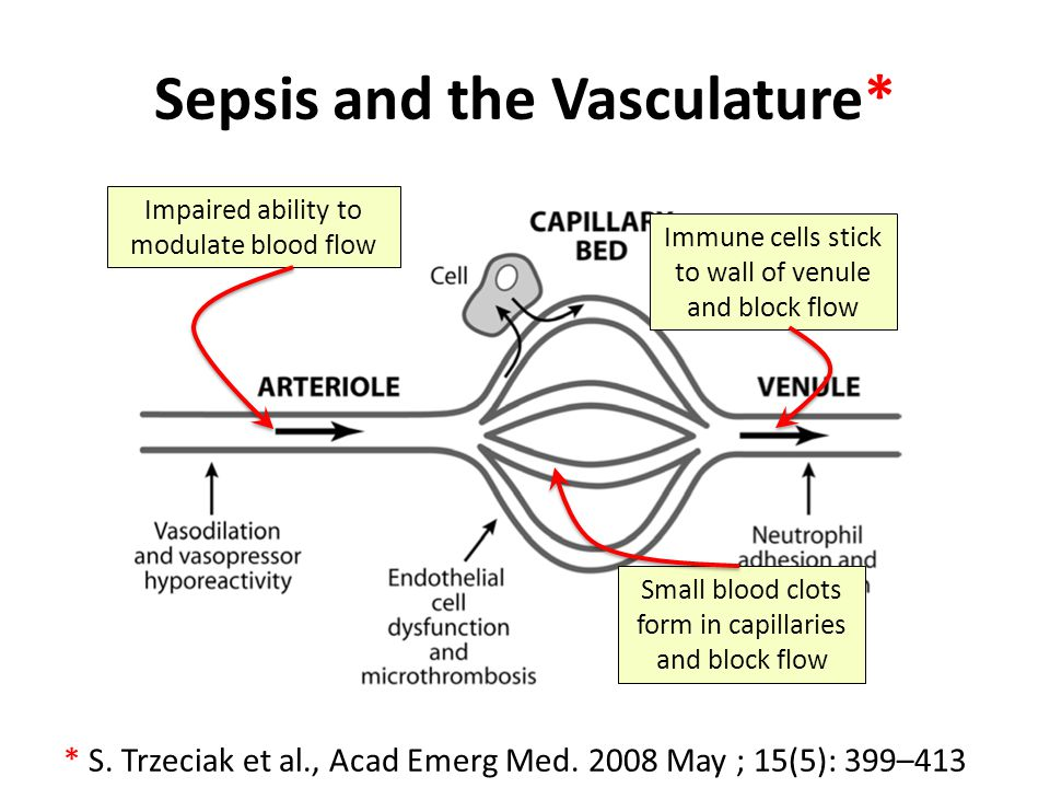 Sepsis and the Vasculature*