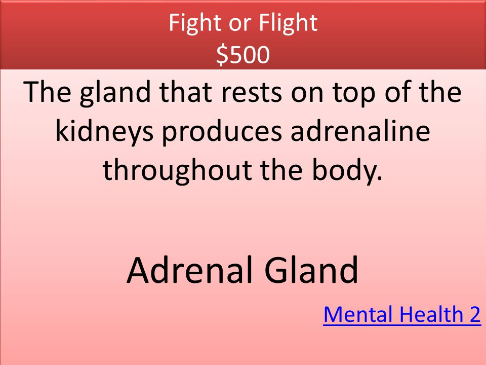 Fight or Flight $500 The gland that rests on top of the kidneys produces adrenaline throughout the body.