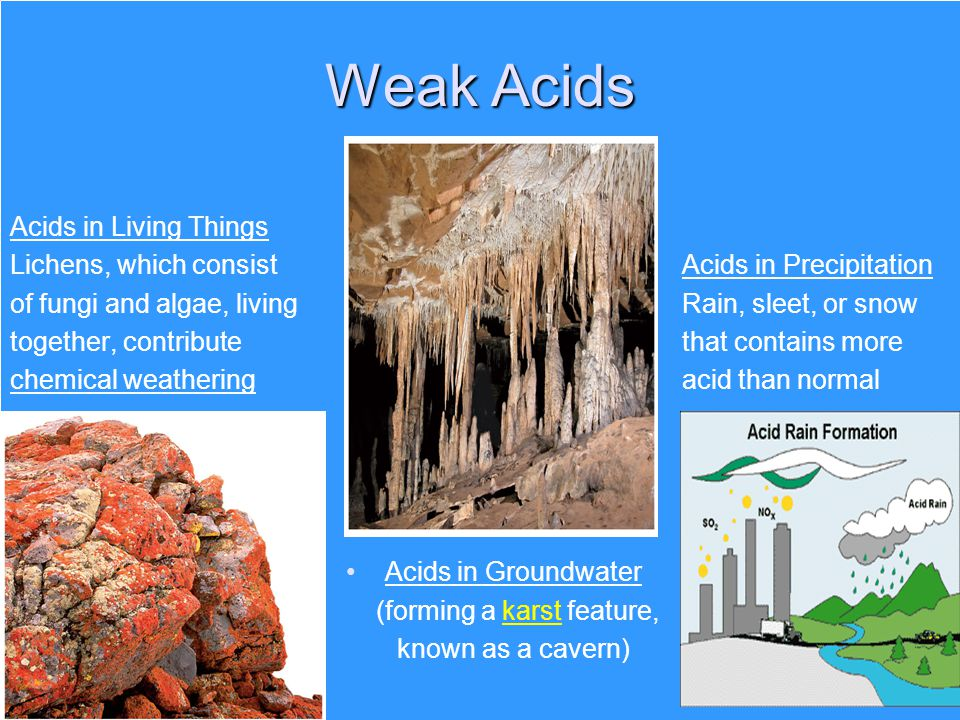 Weak Acids Acids in Living Things