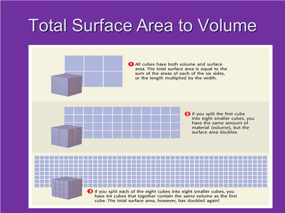 Total Surface Area to Volume