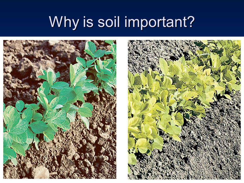 Why is soil important