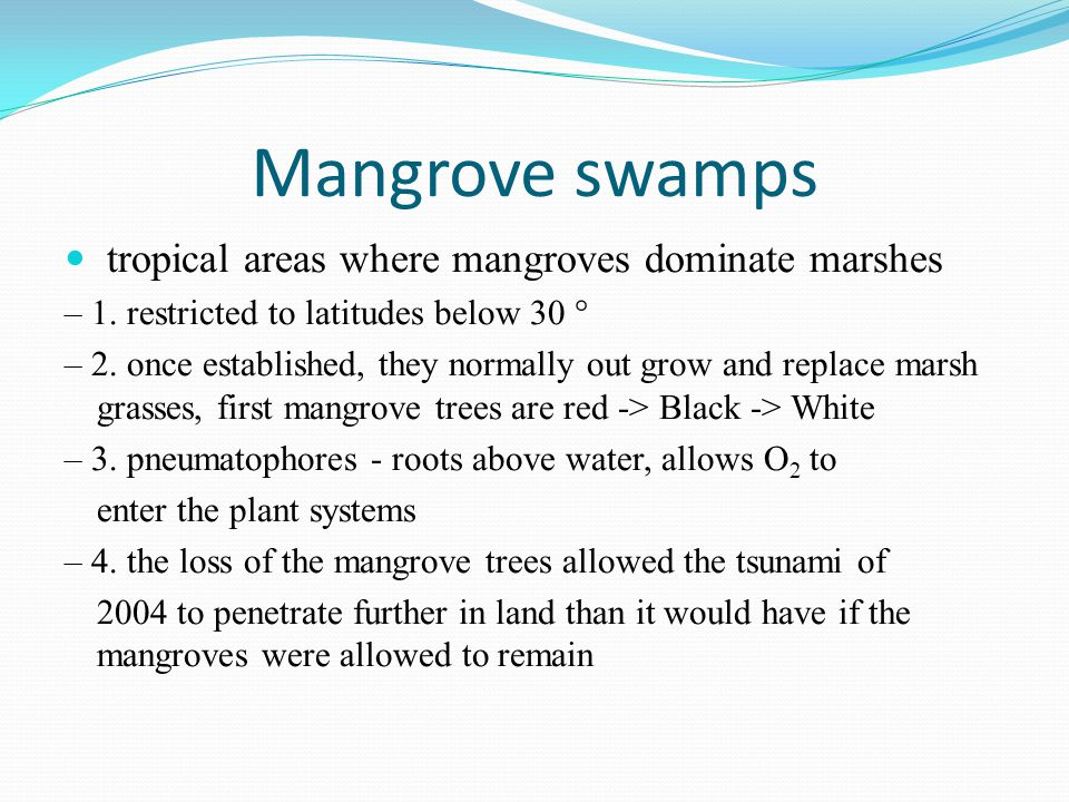 Mangrove swamps tropical areas where mangroves dominate marshes