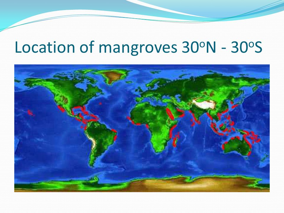 Location of mangroves 30oN - 30oS