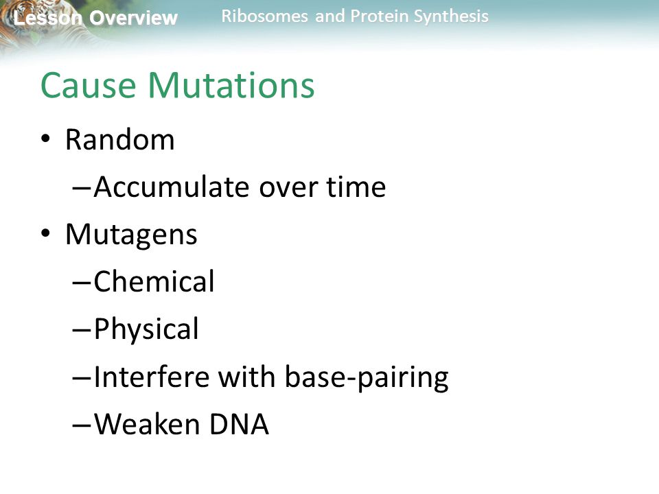 Cause Mutations Random Accumulate over time Mutagens Chemical Physical