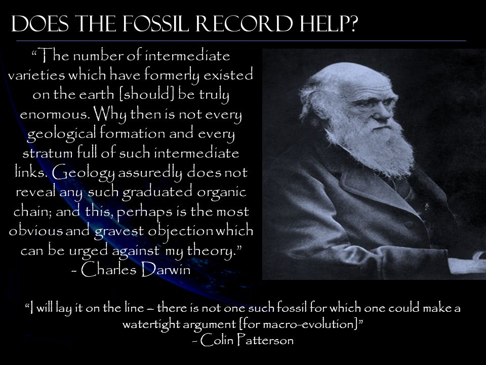 Does The Fossil Record Help