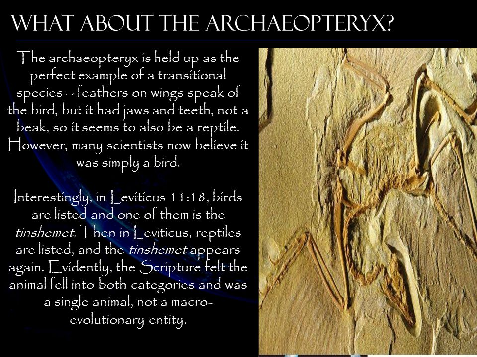 What about the Archaeopteryx