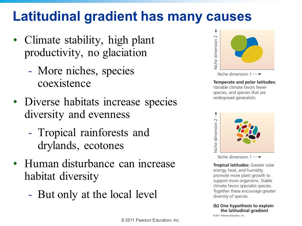 Latitudinal gradient has many causes