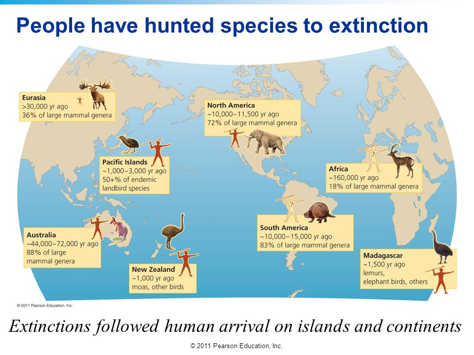 People have hunted species to extinction