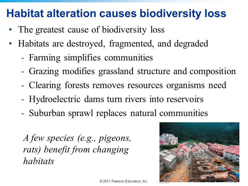 Habitat alteration causes biodiversity loss