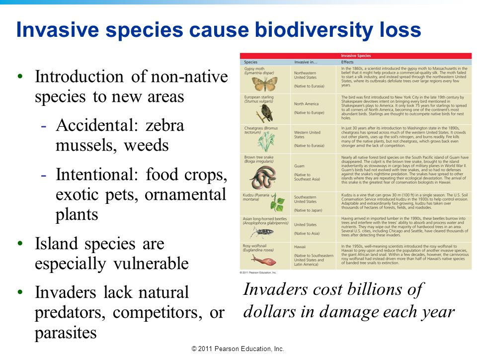 Invasive species cause biodiversity loss