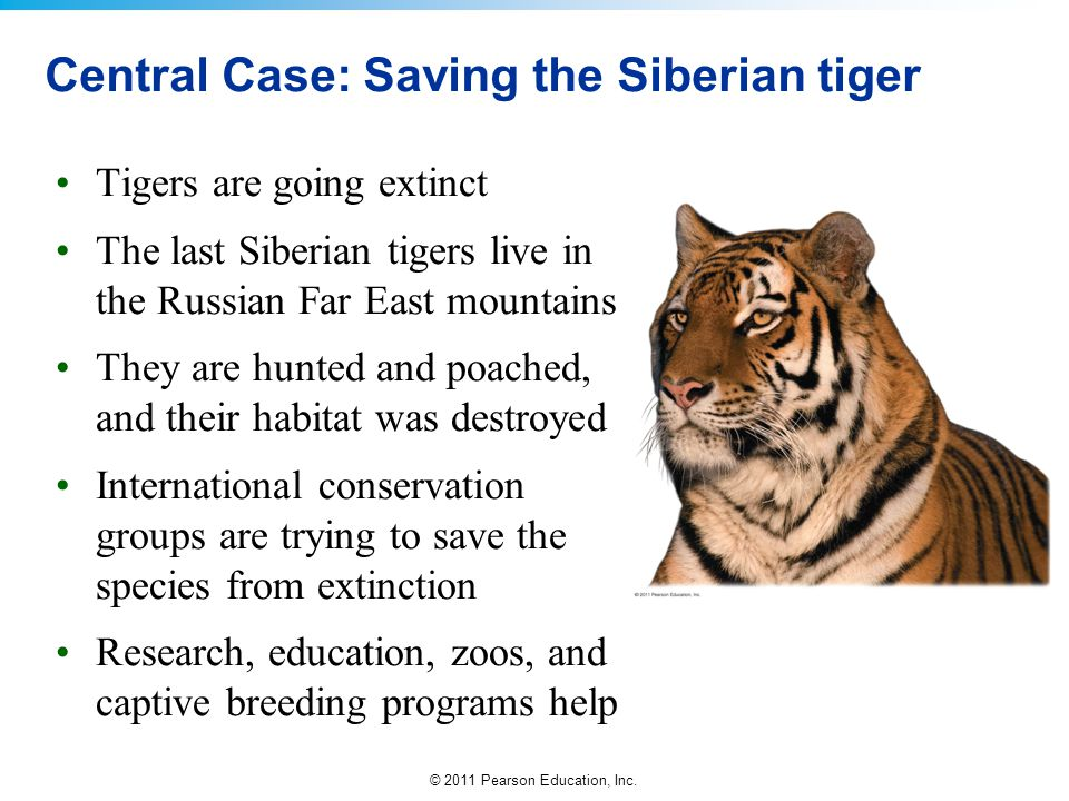 Central Case: Saving the Siberian tiger