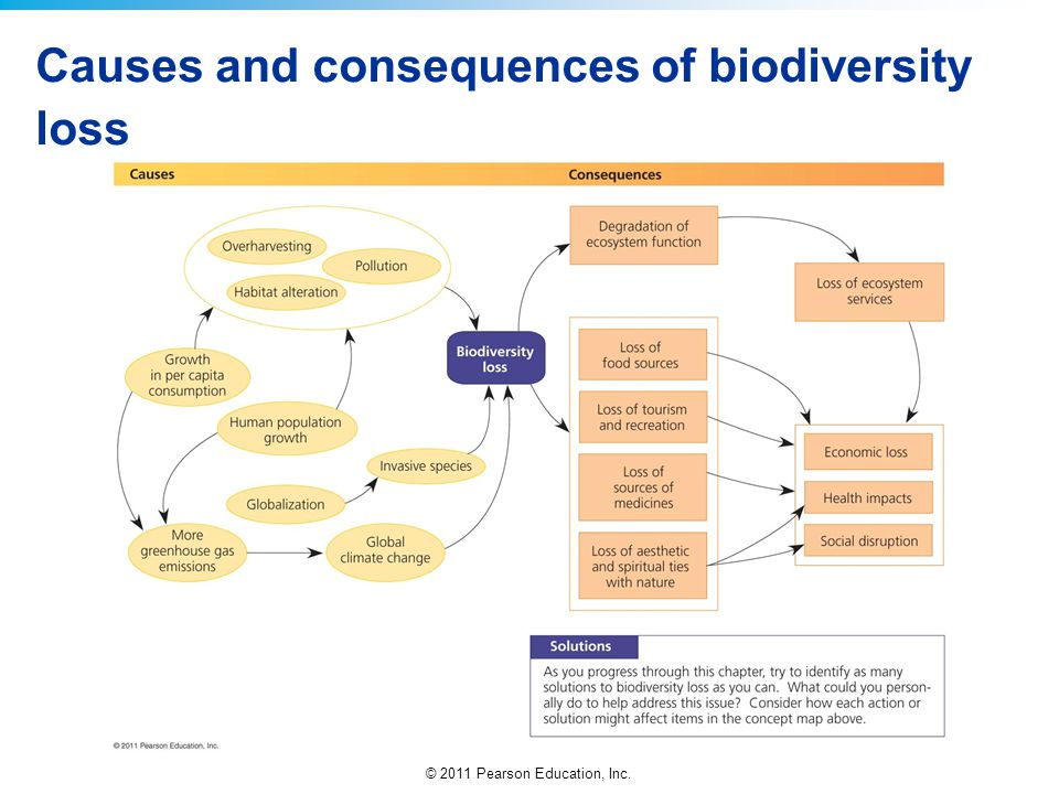 Causes and consequences of biodiversity loss