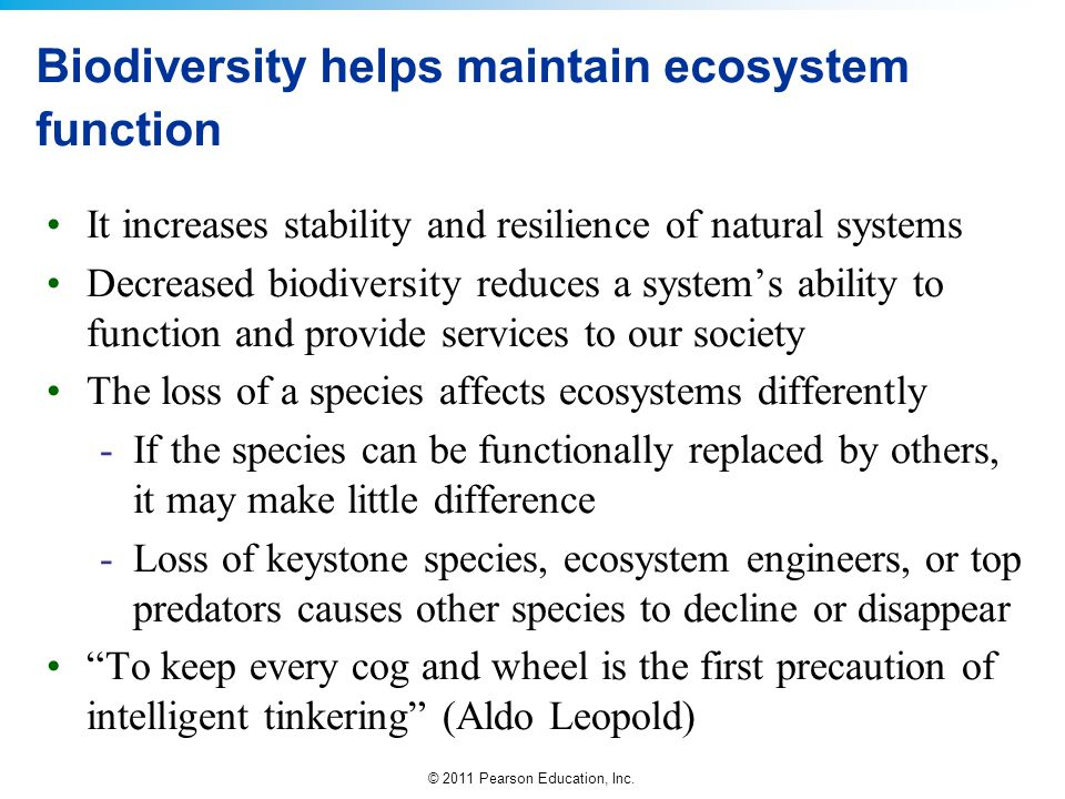 Biodiversity helps maintain ecosystem function