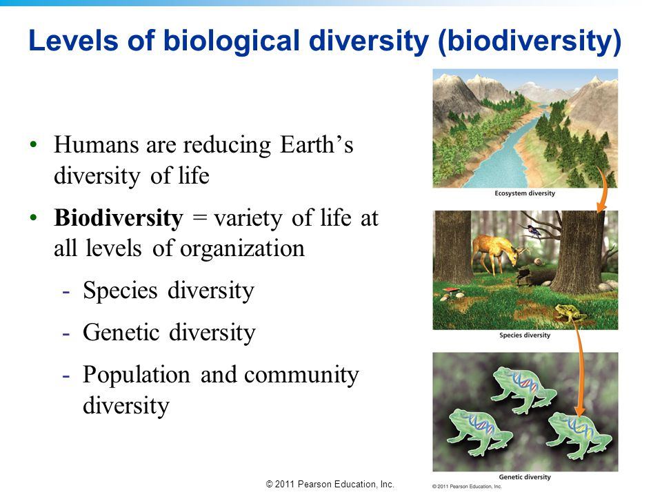 Levels of biological diversity (biodiversity)