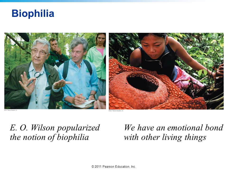 Biophilia E. O. Wilson popularized the notion of biophilia