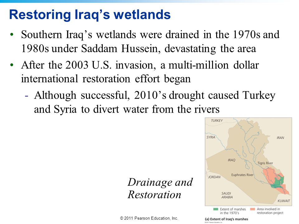 Restoring Iraq's wetlands