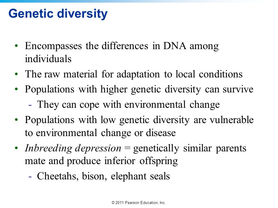 Genetic diversity Encompasses the differences in DNA among individuals