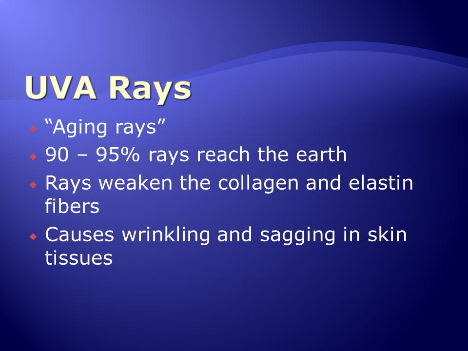 UVA Rays Aging rays 90 – 95% rays reach the earth