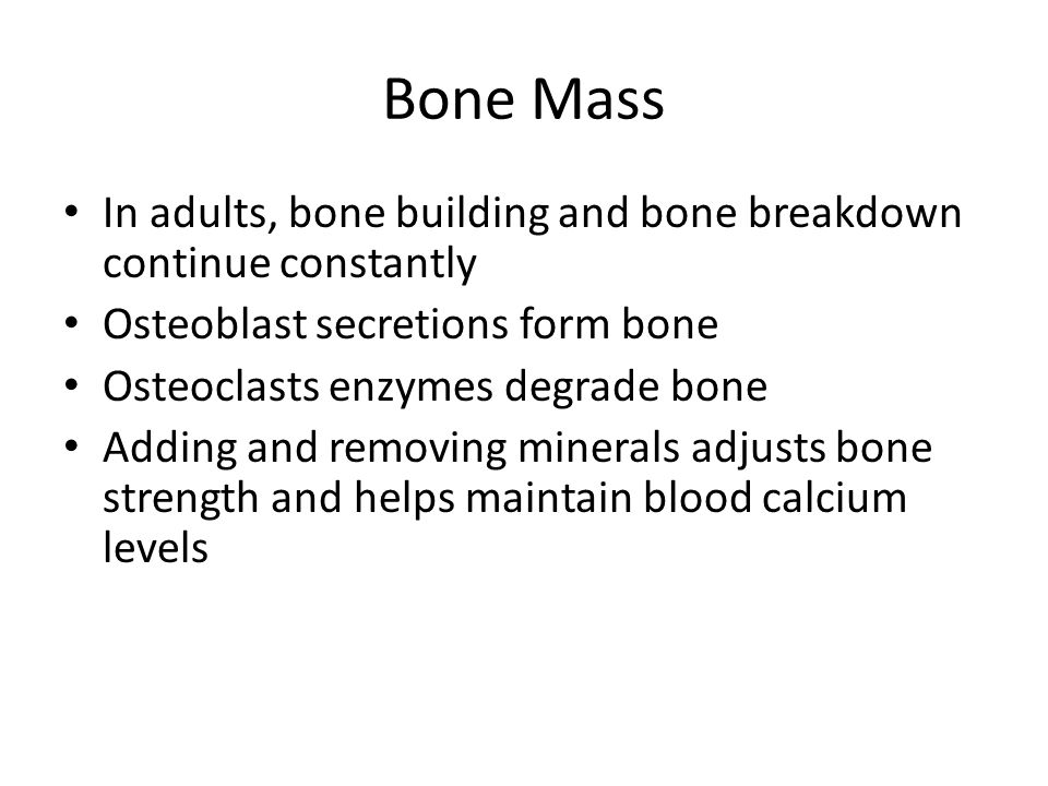 Bone Mass In adults, bone building and bone breakdown continue constantly. Osteoblast secretions form bone.