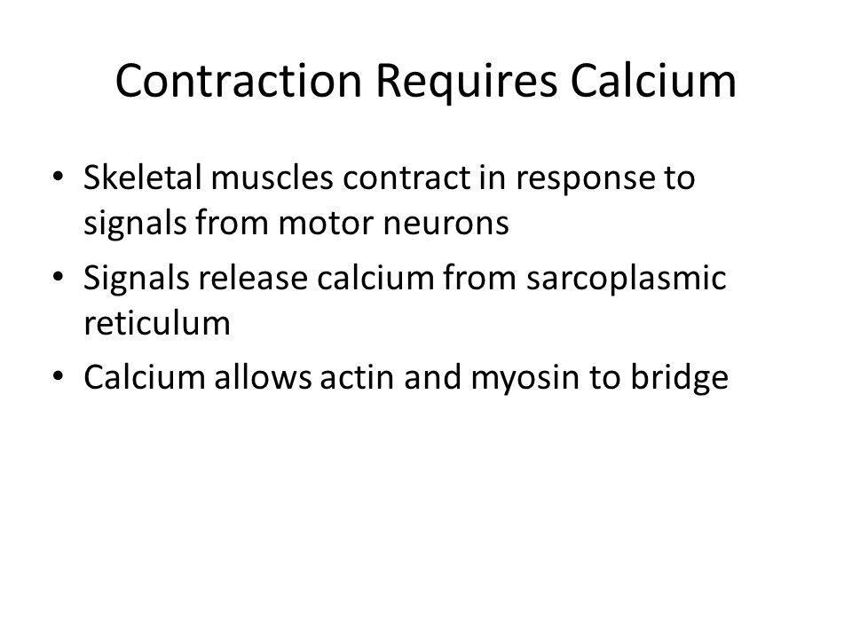 Contraction Requires Calcium