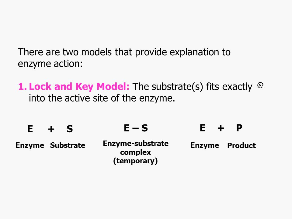Enzyme-substrate complex (temporary)