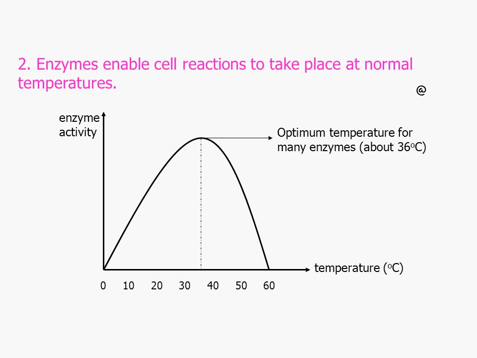 2. Enzymes enable cell reactions to take place at normal temperatures.