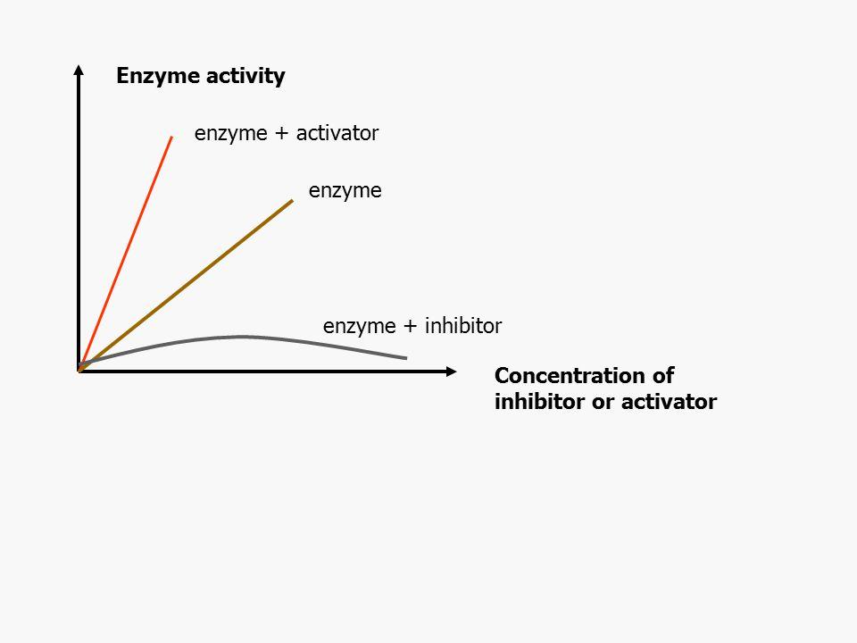 Enzyme activity enzyme + activator. enzyme. enzyme + inhibitor.