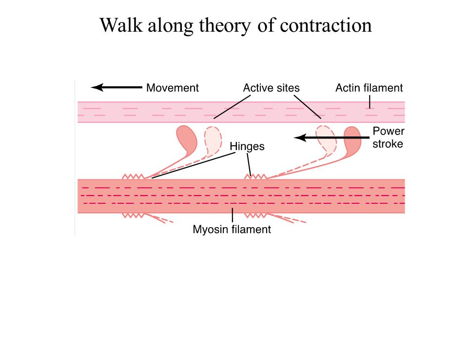 Walk along theory of contraction