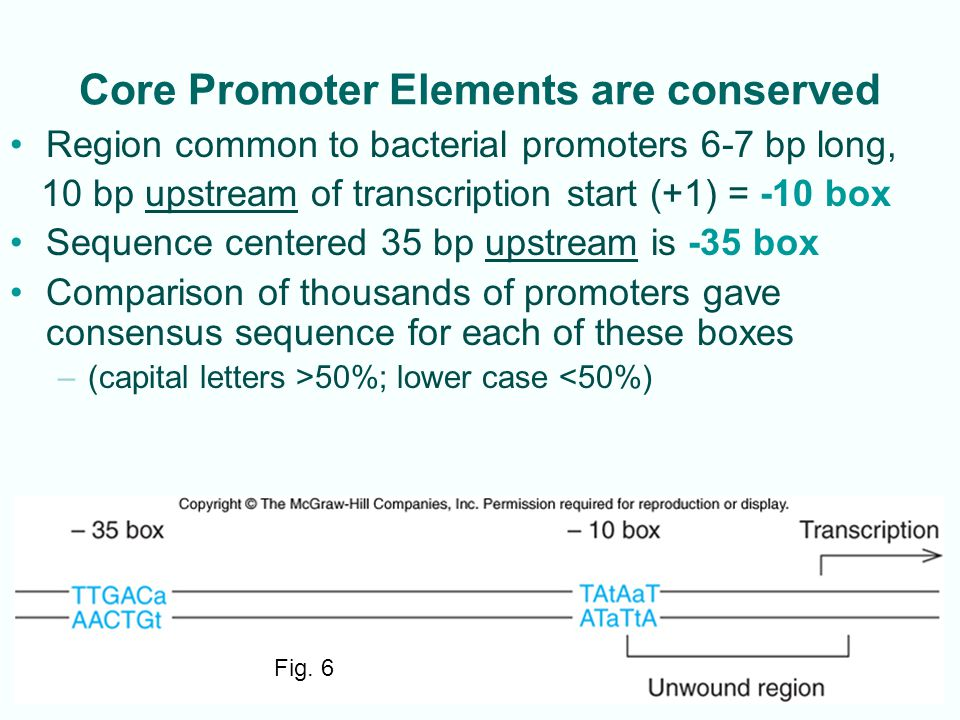 Core Promoter Elements are conserved