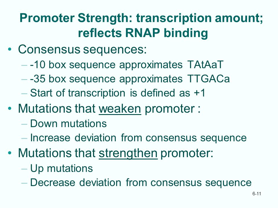 Promoter Strength: transcription amount; reflects RNAP binding