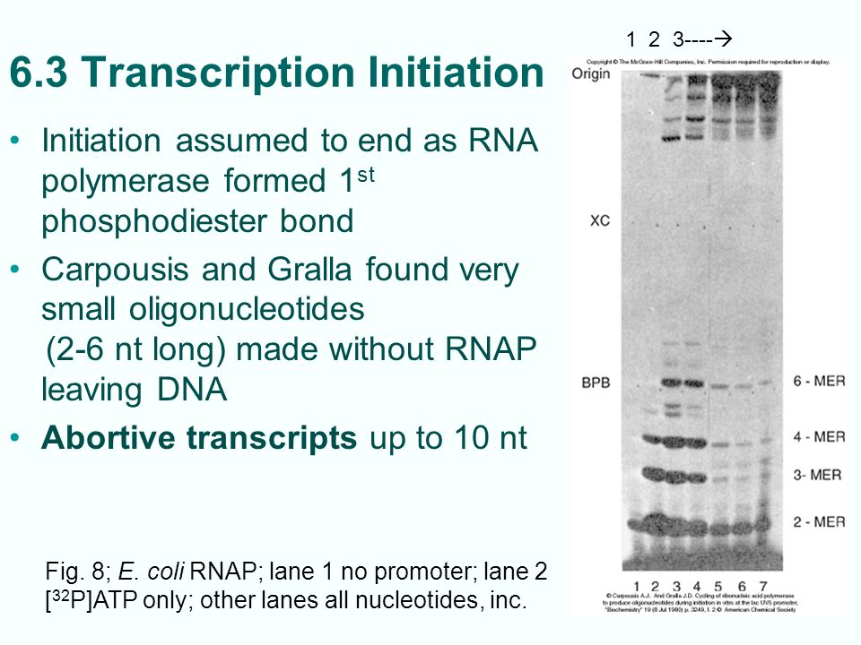 6.3 Transcription Initiation