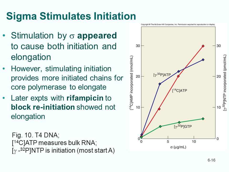 Sigma Stimulates Initiation