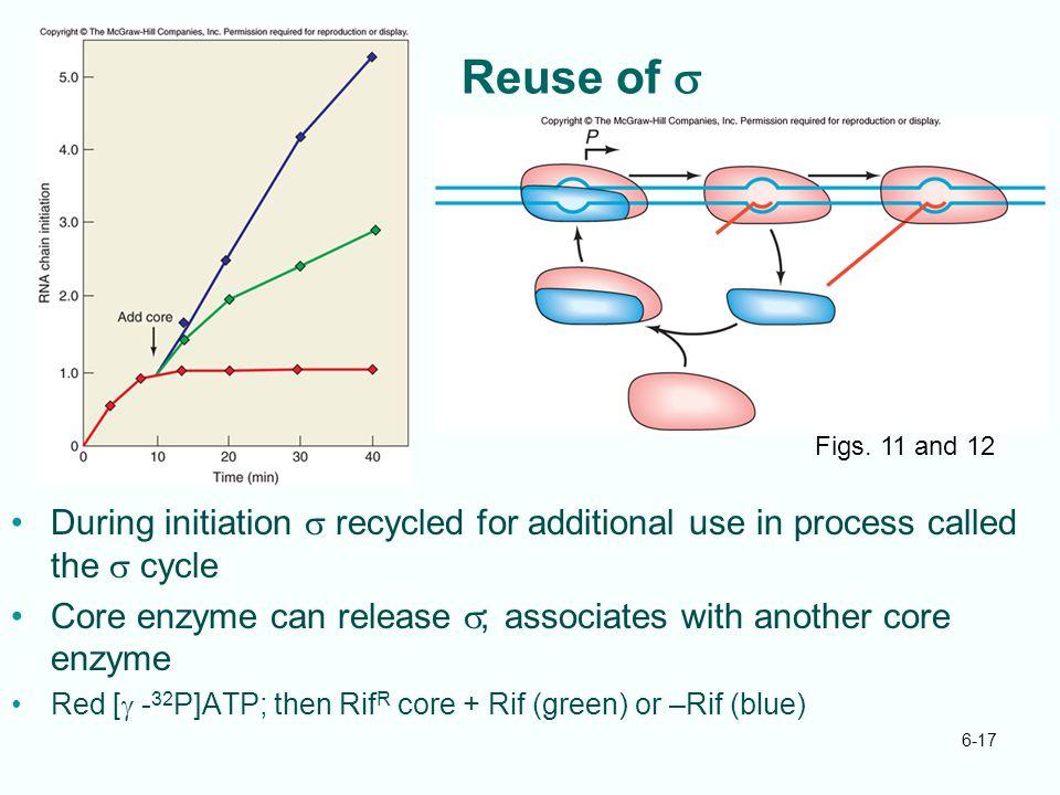 Reuse of s Figs. 11 and 12. During initiation s recycled for additional use in process called the s cycle.