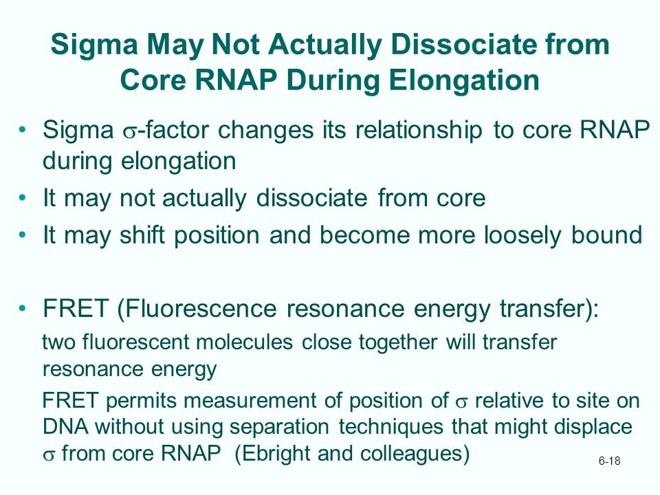 Sigma May Not Actually Dissociate from Core RNAP During Elongation