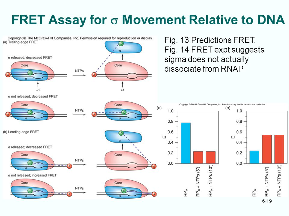 FRET Assay for s Movement Relative to DNA