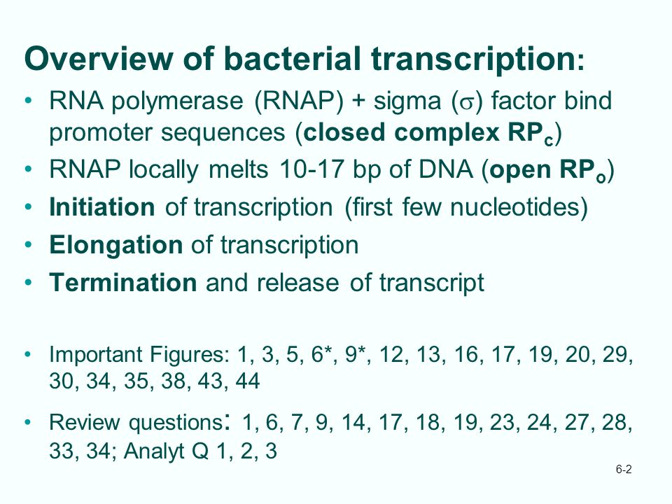 Overview of bacterial transcription: