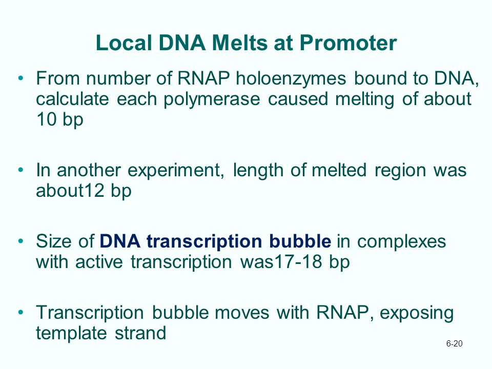 Local DNA Melts at Promoter