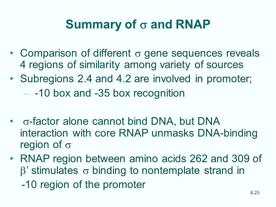 Summary of s and RNAP Comparison of different s gene sequences reveals 4 regions of similarity among variety of sources.