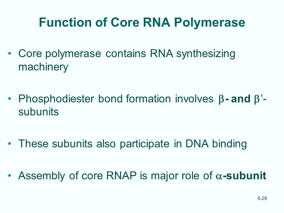 Function of Core RNA Polymerase