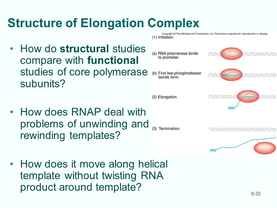 Structure of Elongation Complex