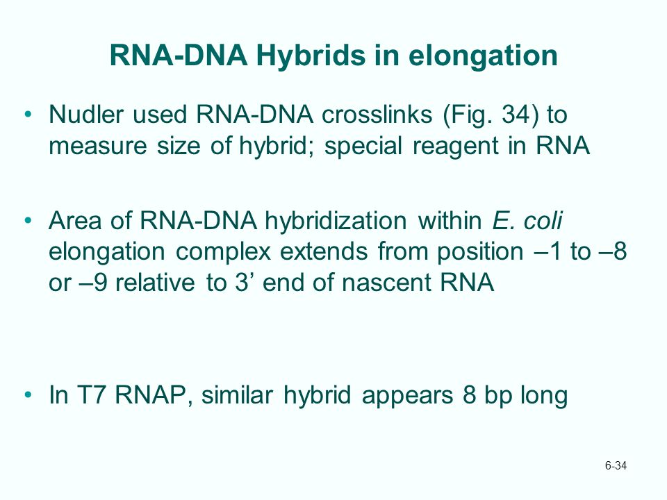 RNA-DNA Hybrids in elongation
