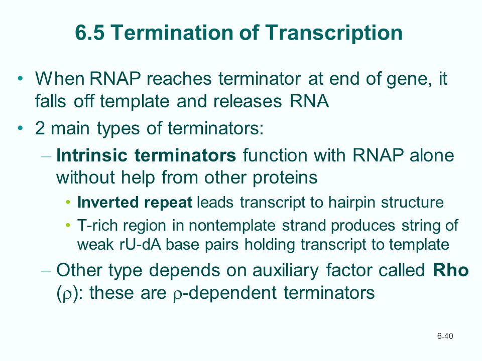 6.5 Termination of Transcription