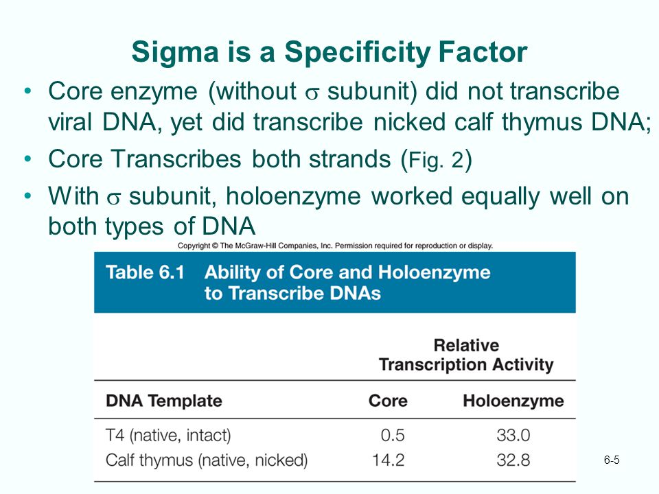 Sigma is a Specificity Factor