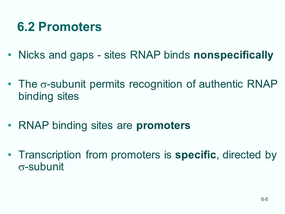 6.2 Promoters Nicks and gaps - sites RNAP binds nonspecifically