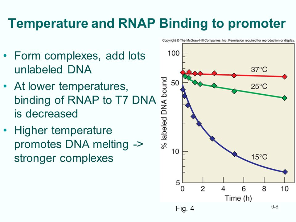 Temperature and RNAP Binding to promoter