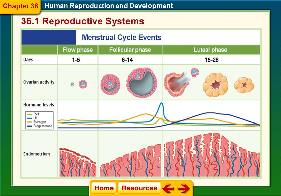 36.1 Reproductive Systems Chapter 36
