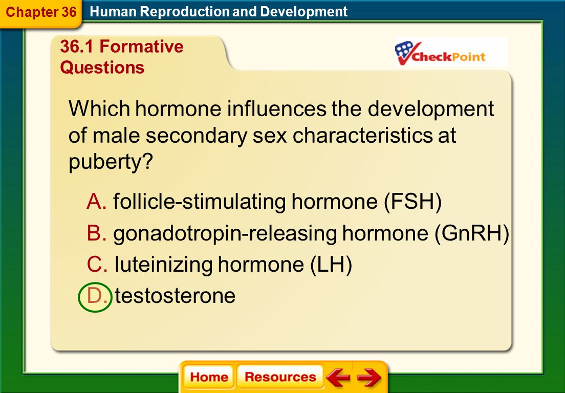 Which hormone influences the development