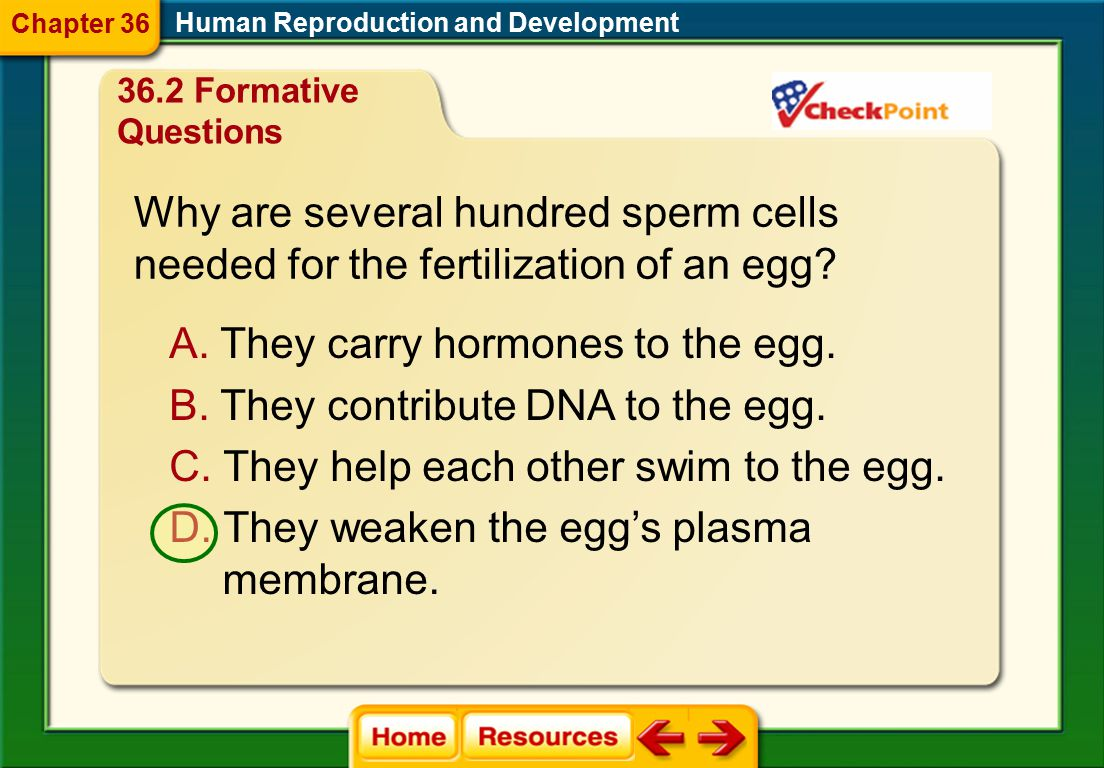 Why are several hundred sperm cells